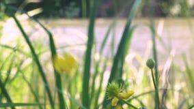De wilde bloemen slingeren in de wind stock footage