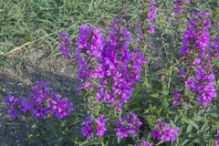 De wilde bloemen sluiten omhoog geschoten Royalty-vrije Stock Fotografie