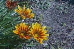 De wilde bloemen sluiten omhoog geschoten Stock Fotografie