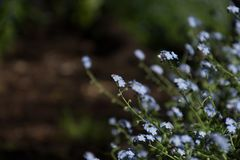 De wilde Bloemen springen Kalm Blauw Bos op stock fotografie