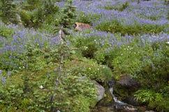 De Wilde Bloemen van de berg Stock Foto's
