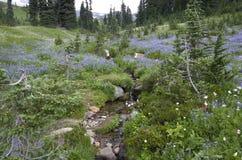 De Wilde Bloemen van de berg Stock Foto