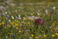 De wilde Bloemen van de Lente stock foto's