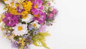De wilde Bloemen van de Zomer Stock Afbeeldingen