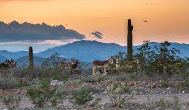 De wilde hollen van Arizona in de woestijn stock afbeelding