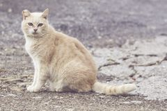 De wilde kat ziet de camera stock afbeelding