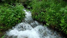 De wilde kreek van het kristalwater in de bergen van Altay stock videobeelden