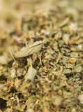 De Wilde marjolein van de orego vulgare Stock Foto's
