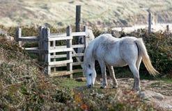 De wilde Poney van de Berg Royalty-vrije Stock Foto's