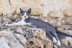 De wilde de straatkat die van Griekenland op oude ru?nes, twee liggen kleurt katje, grijs en wit stock afbeelding