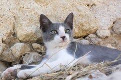 De wilde de straatkat die van Griekenland op oude ru?nes, twee liggen kleurt katje, grijs en wit royalty-vrije stock foto