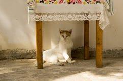 De wilde de straatkat van Griekenland zit in het kader van de lijst in sulight, witte luie kat stock fotografie