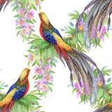 De wilde vogels van Fazantdieren in waterverf bloemen naadloos patroon Royalty-vrije Stock Afbeeldingen