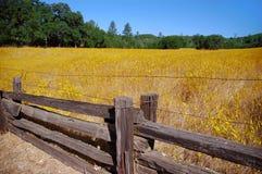 De wilde Weide en het Schermen van de Bloem stock afbeeldingen