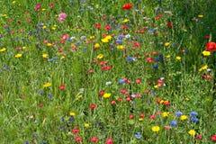 De wilde Weide van de Bloem stock foto