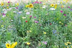 De wilde Weide van de Bloem stock fotografie