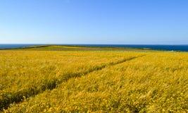 De wilde Weide van de Bloem Diagonale weg Zeegezicht en blauwe hemel Royalty-vrije Stock Foto