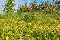 De wilde wilde bloemen, namen bloemen en vlinder toe Stock Foto's