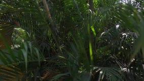 in de Wildernis stock video
