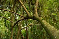 De wildernis Dicht tropisch bos Stock Foto's