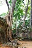 De wildernis die tempelruïnes overneemt bij Ta Prohm Stock Foto
