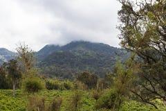 De wildernis op Onderstel Aberdar in de mist Kenia, Afrika Stock Foto's