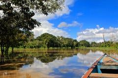 De wildernis van Amazonië Royalty-vrije Stock Afbeeldingen