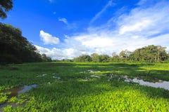 De wildernis van Amazonië stock afbeelding
