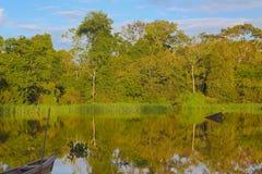 De wildernis van Amazonië Stock Afbeeldingen