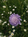 De wildernis van bloemlila Stock Fotografie
