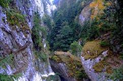 De wildernis van Cheia-kloven stock foto