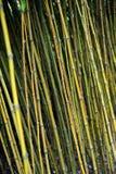 De wildernis van het bamboe, Monte, Madera Royalty-vrije Stock Fotografie