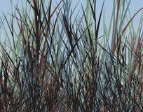 De wildernis van het gras vector illustratie
