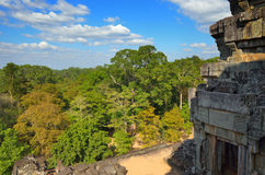 De wildernis van Kambodja royalty-vrije stock fotografie
