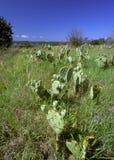 De wildernis van Texas stock afbeelding
