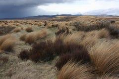 De wildernis van Waiouru Stock Afbeeldingen