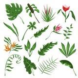 De wildernis verlaat en bloeit vectorreeks vector illustratie