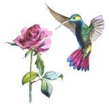 De Wildflowerbloem namen en de colibrivogel in een geïsoleerde waterverfstijl toe stock illustratie