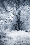 De Wilg van de winter Royalty-vrije Stock Foto