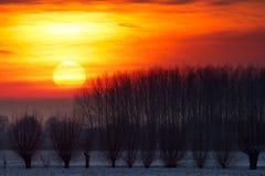 De Wilgen van de zonsondergang Stock Afbeelding