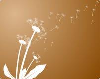 De wind blaast. Stock Afbeelding