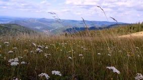 De wind blaast groen gras in de bergen stock videobeelden
