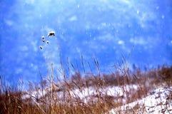 In de wind en de sneeuw Stock Foto