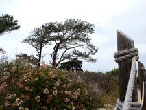 De wind Geveegde Groei van Vreedzame Kustbomen en Bloemen op Bewolkte, Wazige Dag stock afbeeldingen