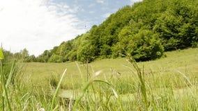 De wind kietelt hoog groen gras in de libelvijver van de de zomermiddag stock video