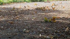 De wind neemt bladeren op stock videobeelden