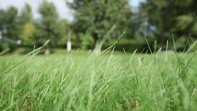 De wind schudt groen gras op gebied tegen bomen stock footage
