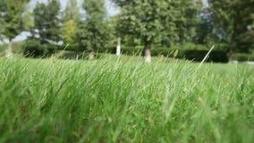De wind schudt groen gras op gebied tegen bomen stock videobeelden