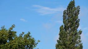 De wind schudt takken van bomen stock videobeelden