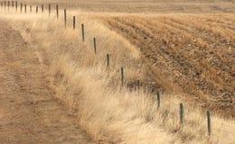 De Wind van de prairie Stock Foto's